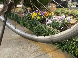 Cycle & Flower